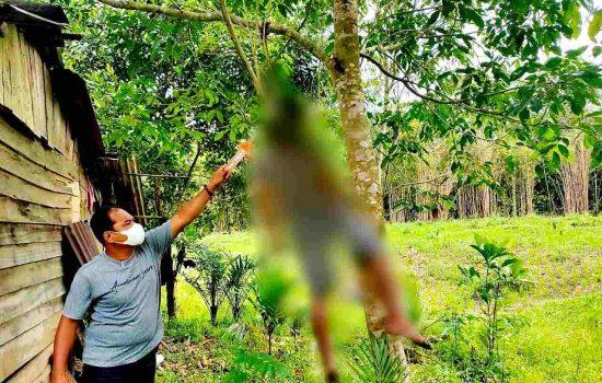 Warga Kecamatan Tumbang Titi Digegerkan Penemuan Mayat Gantung Diri di Pohon Jengkol